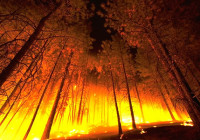 forest-fire-usda_120200_1